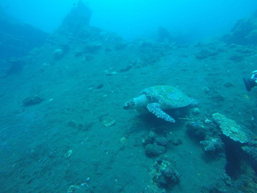 Diving 25.02.2019