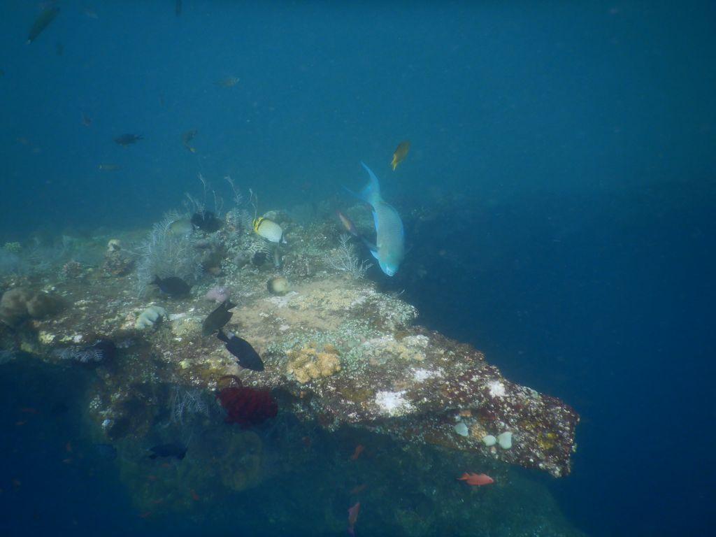 Diving 27.03.2019