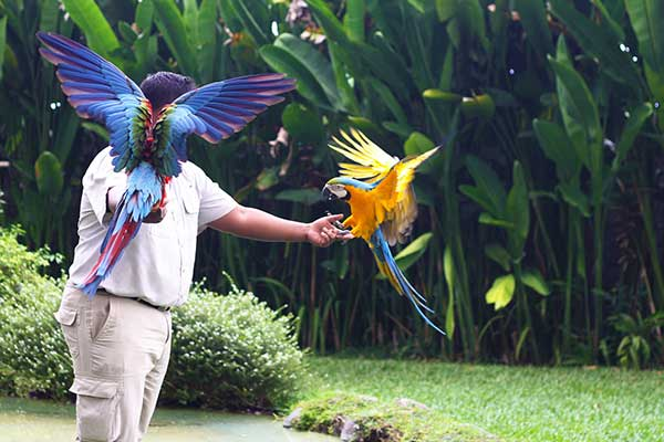 Bali Bird and Reptile Park