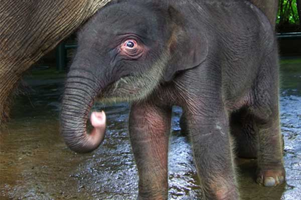 Парк слонов Бали