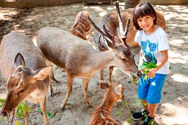 зоопарк бали