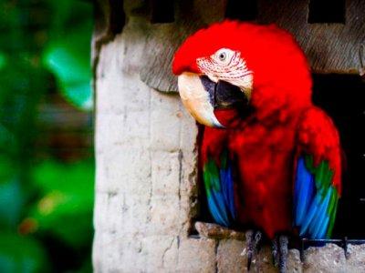 Tickets to Safari Park in Bali. Children under 3 years free!