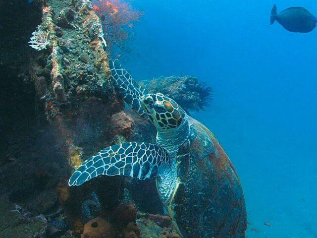 Снорклинг в Манта Поинт на острове Нуса Пенида по низким ценам!