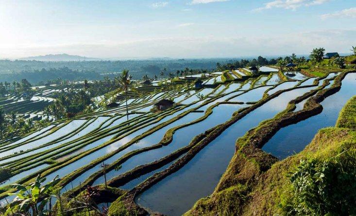 Рисовые террасы Jatiluwih